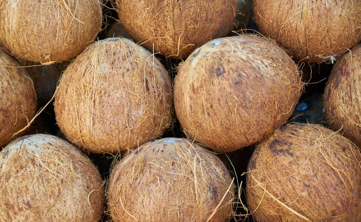 hnědé kokosy