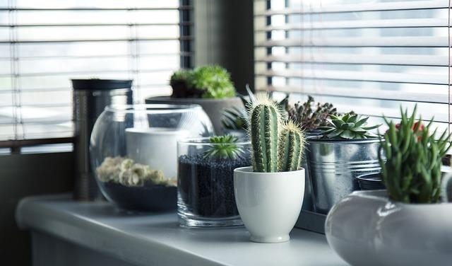 Sbírka kaktusů