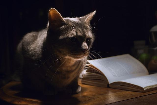 kočka sedící na stole a vyžadující pozornost.jpg
