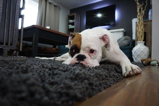 rozvalený pes.jpg