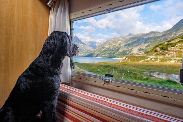 pes sledující okolí z okna